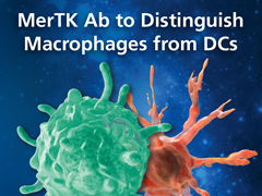 MerTK Ab to Distinguish Macrophages from DCs