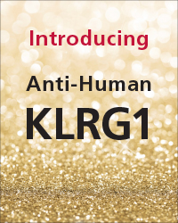 Anti-Human KLRG1