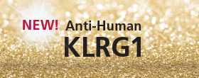 Anti-Human KLRG1 Antibody