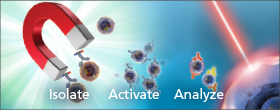 MagniSort® Cell Separation