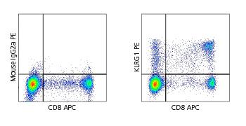 Anti-Human KLRG1 for flow cytometry