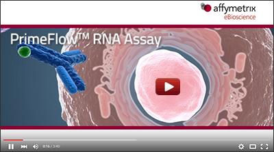PrimeFlow RNA Assay video